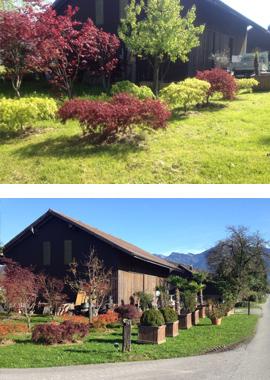 Xl plant baumschule for Gartendekor ahorn